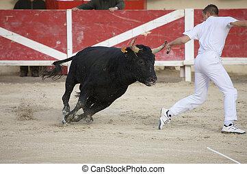 Saintes Maries de la Mer, La Camargue, Provence, France, Europe - october 29, 2008: bullfight in the arena of Saintes Maries de la Mer, La Camargue, Provence, Frankreich, Europa