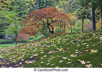 saison, arbre, japonaise, automne, pendant, érable