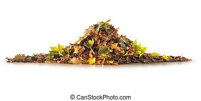 saison, feuilles, arbre, isolé, tas, fond, automne, blanc
