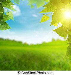 saisonnier, mignon, beauté, printemps, arrière-plans, bokeh, field.