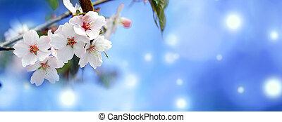 Sakflowers on a blurred backgroundura - Beautiful Sakura...