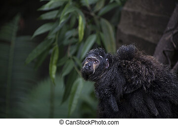 Saki Monkey Family