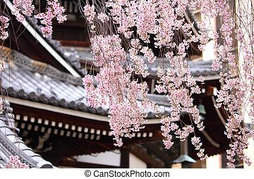 sakura, 木, 日本語, 寺院