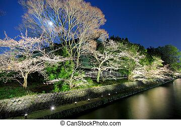 sakura, 树, 湖, 夜晚