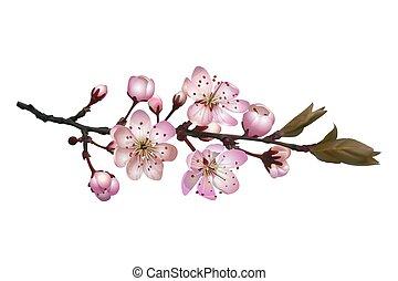 sakura, 背景, 花