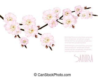 sakura, 背景, branches., 開くこと, ベクトル, illustration., 自然, 春