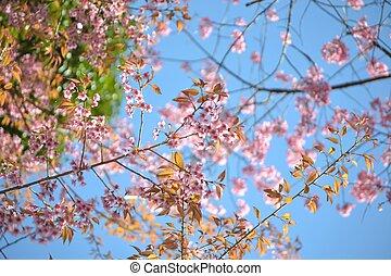 Albero sakura rosa albero nero sakura fiori trunk for Sakura albero