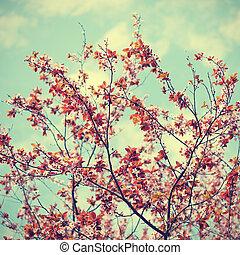 sakura, blomningen, på, sky, bakgrund, in, retro designa