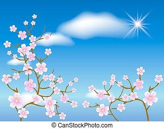 sakura, blomstre