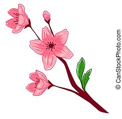 Sakura blooming, blossom of cherry tree branch