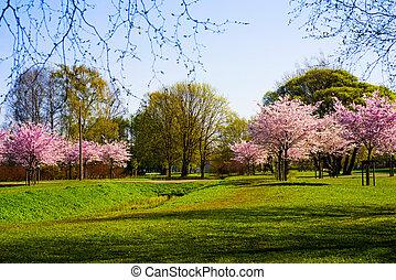 Sakura branch against the blue sky.