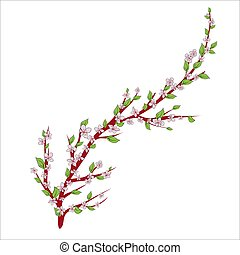 Sakura branch. Isolated on white background. Vector illustration. Hand drawing.