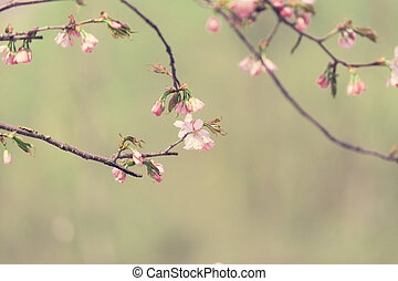 Sakura branch with a pink flowers