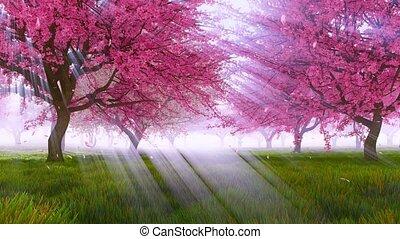 Sakura cherry blossom falling petals slow motion - Spring...