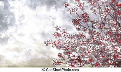 Sakura cherry blossom watercolor background - Hand painted...