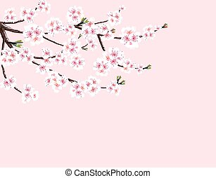 Sakura. Cherry branch with white flowers. Isolated on a pink background. illustration