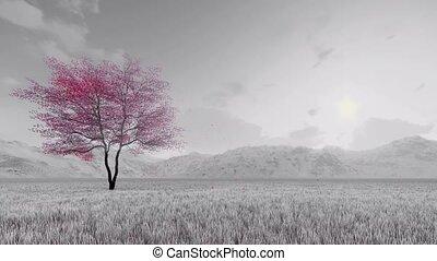 Sakura cherry tree in bloom slow-motion 4K - Monochrome...