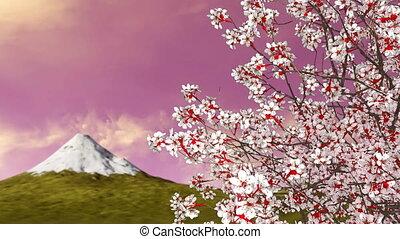 Sakura cherry tree in blossom and mount Fuji 4K