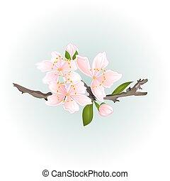 Sakura cherry twig vector