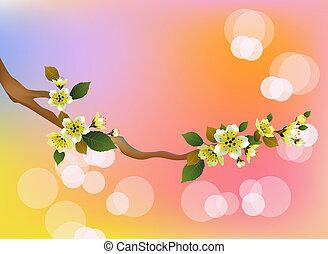 Evening in the garden blooming cherry