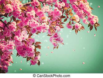 sakura, fleurs, fond, art, design., printemps, sacura, fleur