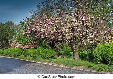 Sakura flowering trees in the city
