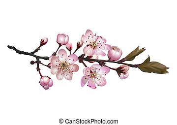 Sakura flowers background . Blossoming cherry branch with white flowers. Realistic vector illustration