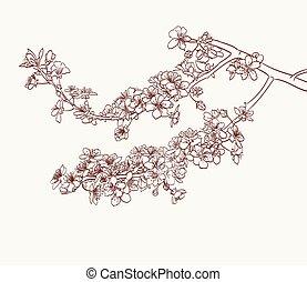 sakura flowers drawing