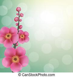Sakura Flowers With Bokeh