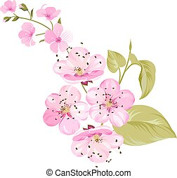 Sakura japan cherry branch with blooming. Cherry blossom. Blossom branch of pink sakura flowers. Japanese cherry tree. Beautiful pink cherry blossom flowers. Sacura isolated over white.Greeting or invitation card. Vector illustration