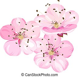 Sakura japan cherry branch with blooming. Cherry blossom. Blossom branch of pink sakura flowers. Beautiful pink cherry blossom flowers. Sacura isolated over white.Greeting or invitation card. Vector illustration