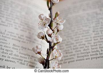 sakura, könyv
