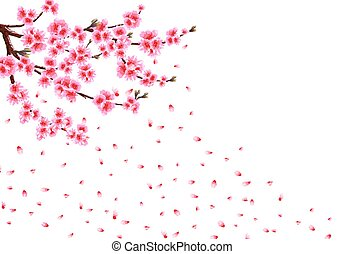 Sakura loses petals in the wind. Branches with pink flowers and cherry buds. isolated on white background. illustration
