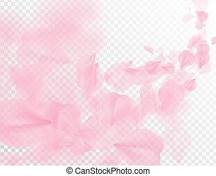 Sakura petal flying vector background. Pink flower petals wave illustration isolated on transparent white. 3D romantic valentines day spring tender light backdrop. Overlay tenderness romance design.