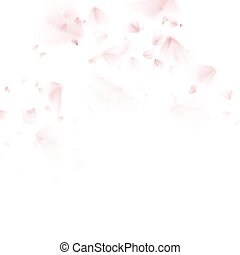 Sakura petal softly. EPS 10 vector file included