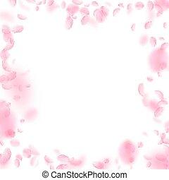 Sakura petals falling down. Romantic pink flowers
