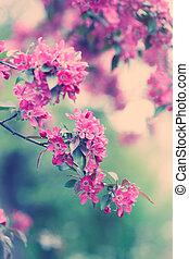 Sakura red blossoms in spring season
