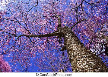 Sakura tree on blue sky