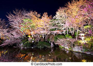 Sakura tree with river