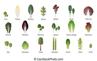 salad., ベクトル, 野菜, 葉が多い, bowl., セット, 緑 サラダ