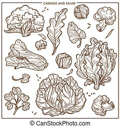 Salad lettuce and cabbages vegetables vector sketch icons -...
