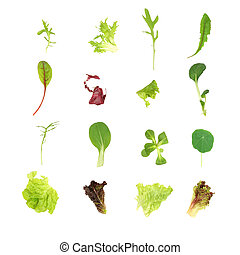 Selection of specialised salad lettuce leaves, over white background.