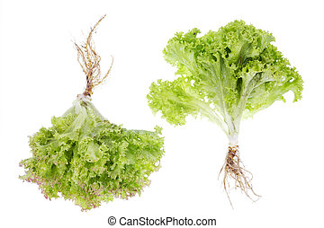 salad small bushes with roots isolated