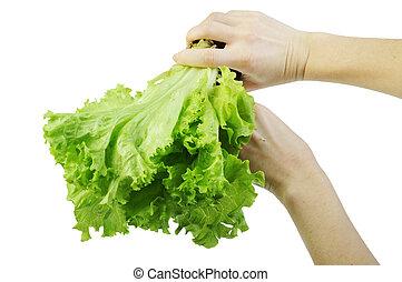 salade verte, blanc, isolé, fond, main