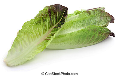 salade verte, frais, romaine