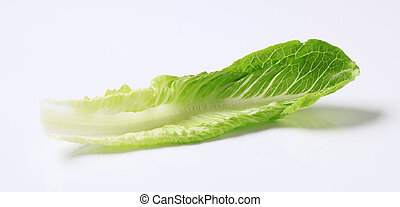 salade verte, romaine