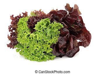 salade verte, variété