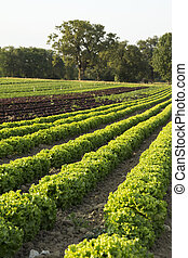 Salads fields agricultural