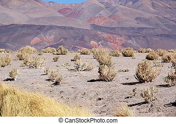 salar, argentine, campo, antofalla, atacama, paysage, ojos,...