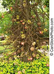 Salavan tree